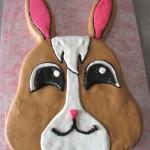 Petshop kanína